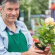 Stock Photo: Male florist holding flower