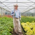 Gardener holding a spade while smiling — Stock Photo