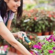 Worker tending to plants — Stock Photo #23088244