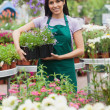 Cheerful florist carrying out tray of plants - Foto de Stock