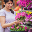 Woman choosing pink flower in garden center — Stock Photo #23088622