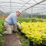 Gardener smiling while tending to plants — Stock Photo
