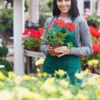 Garden center worker holding a red flower — Stock Photo
