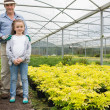 Stock Photo: Little girl with grandfather in greenhouse