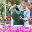 Florist watering plants — Stock Photo #23089114