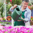 Foto Stock: Florist watering plants