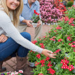 Stock Photo: Couple crouching to look at flowers