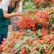 Garden center worker checking plants — Stock Photo