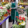 Florist putting the plants into the trolley - Stock Photo