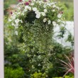 Hanging flower pot - Stock Photo