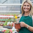 Blonde garden center worker holding flower pot — ストック写真