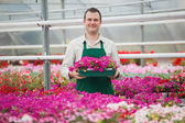 Man holding array of flowers in greenhouse — Stock Photo
