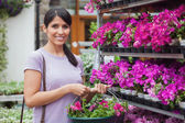Woman buying pink flowers — Stock Photo
