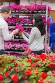 Couple picking flower from shelf — Stock Photo