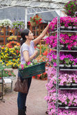 Cheerful woman taking a flower — Stock Photo