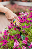 Gardener spading flowers — Stock Photo