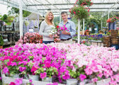 Couple choosing plants in the garden centre — Stock Photo