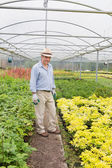 Smiling man standing in greenhouse — Stock Photo