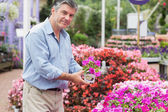 Man deciding on the pink flower — Stock Photo