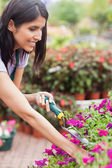Worker tending to plants — Stock Photo