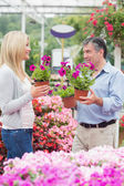 Couple discussing flowers — Foto Stock