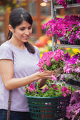 Woman choosing pink flower in garden center — Stock Photo