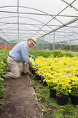 Gardener smiling while tending to plants — Stock Photo