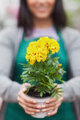 Woman presenting a yellow flower — Stock Photo