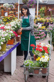 Woman filling the trolley with plants in the garden center — Stock Photo