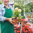 Stock Photo: Gardener holding a plant