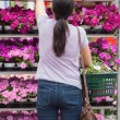 Stock Photo: Womtaking flower from shelves