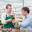 Man and employee discussing potted plant in greenhouse — Stock Photo #23090282
