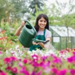 Assistant watering flowers — Stock Photo