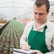 Greenhouse worker taking notes - Stock Photo