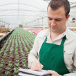 Stock Photo: Greenhouse worker taking notes