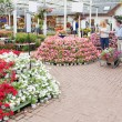 Outside of garden center with many types of plants and flowers — Stock Photo