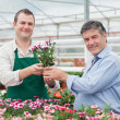 Employee giving potted plant to customer in greenhouse — Stock Photo #23092050