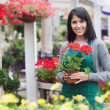 Garden center worker holding red flower while standing outside — Stock Photo