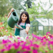 Cheerful gardener watering plants — Stock Photo #23092304