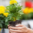Woman about to put plant into pot — Stockfoto