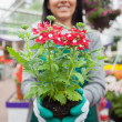 Stock Photo: Florist planting flower
