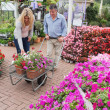 Couple putting flowers in trolley - Stock Photo