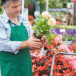Stock Photo: Florist holding white flower