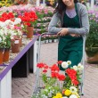Garden center employee pushing trolley — Stockfoto