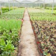 Greenhouse nursery - Foto Stock