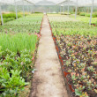 Greenhouse nursery - Foto de Stock