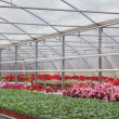 Stock Photo: Greenhouse with flowers and shrubs