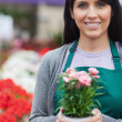 Garden center worker holding a potted flower and smiling — Stock Photo #23092856