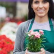 Garden center worker holding a potted flower and smiling — Stock Photo