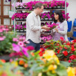 Couple discussing purple flowers — Stock Photo #23092918